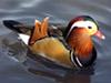 My Friend Debbie - Be A Duck